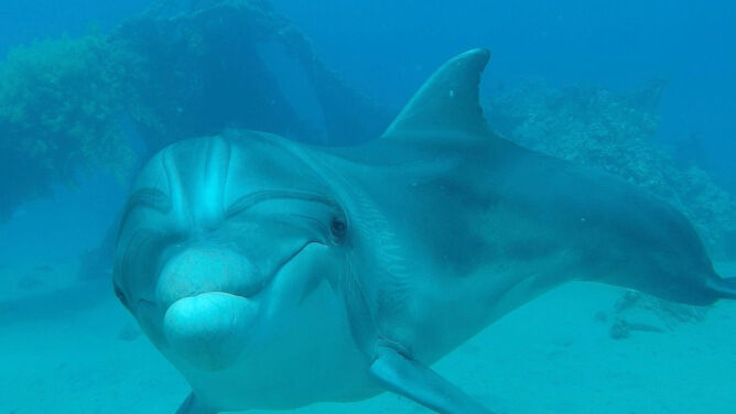 Miejsce, gdzie delfiny są na wyciągnięcie ręki