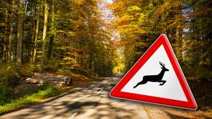 Uwaga: jesienią zwierzęta częściej wybiegają na drogę